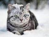 Наше племя!!! Коты Воители... Племя снежных гор